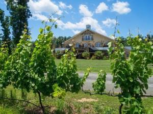 ROA--vineyard